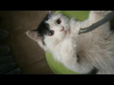 Ищу хозяина) Отдам котенка в хорошие руки))